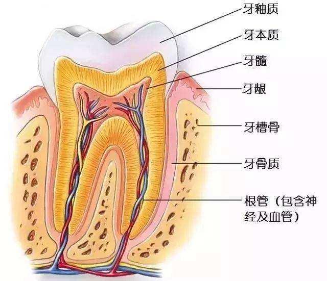 根管治疗就是抽牙神经吗?根管治疗和牙髓治疗是一回事吗?